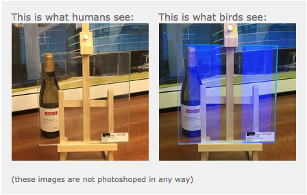 Bird Safe Glass
