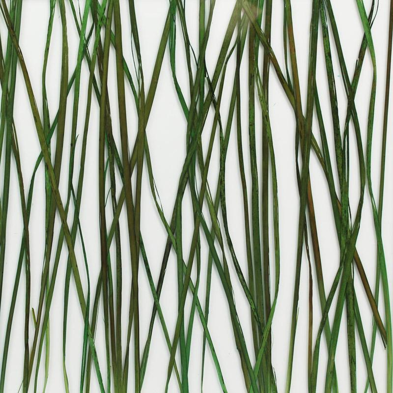 ati laminates naturals in glass surface products bayou grass