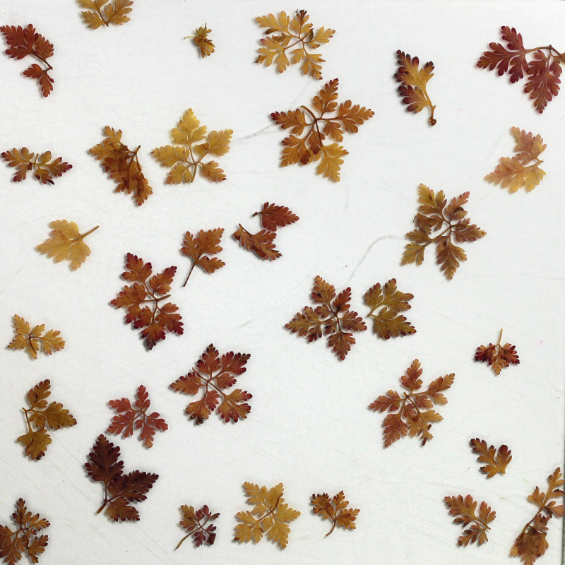 ati laminates naturals in glass surface products fern mist