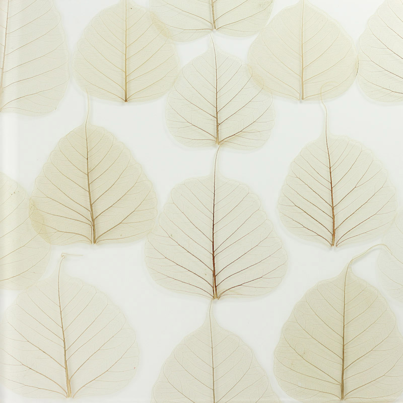ati laminates naturals in glass surface products fig leaf fossils