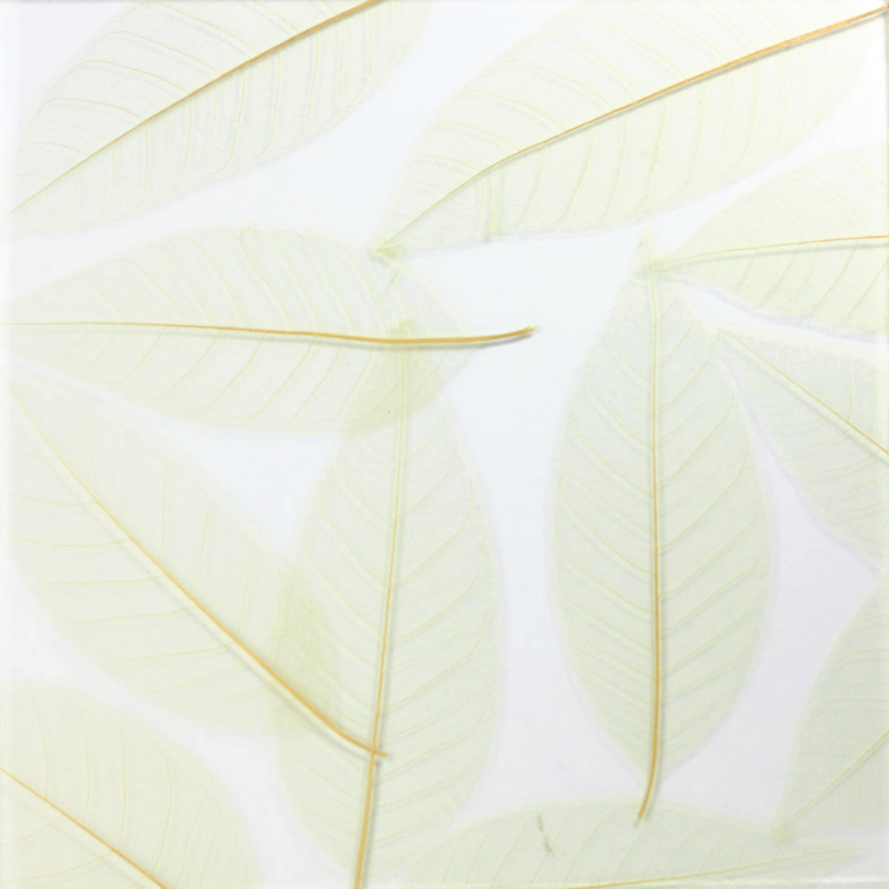 ati laminates naturals in glass surface products magnolia fossils