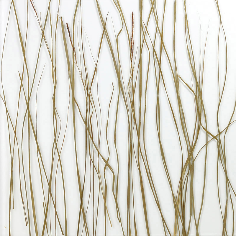 ati laminates naturals in glass surface products marsh grass