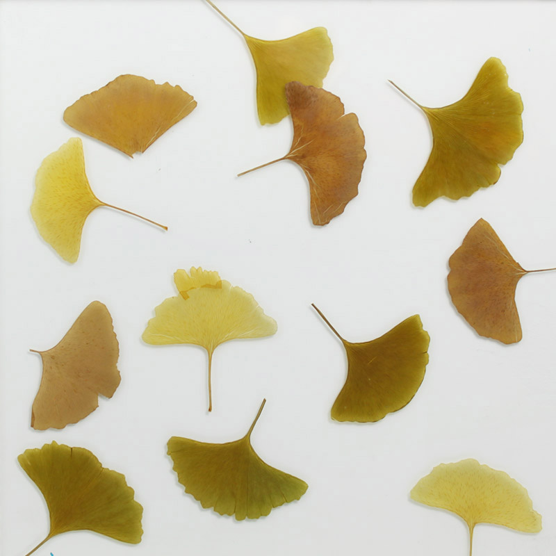 ati laminates naturals in glass surface products polychrome gingko