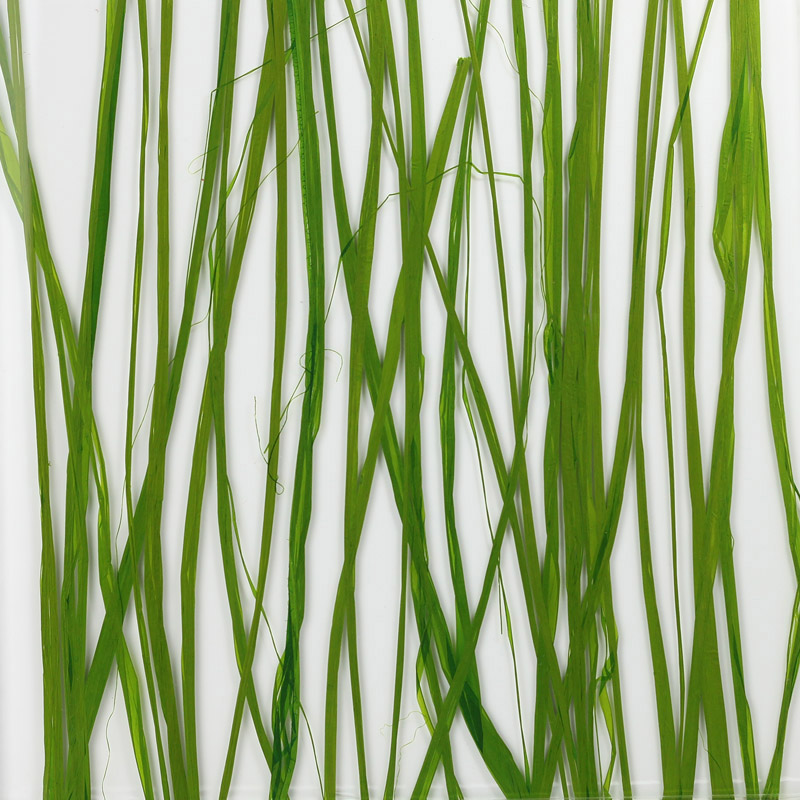 ati laminates naturals in glass surface products sea grass